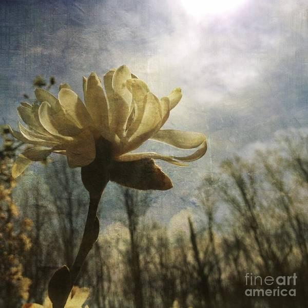 Photograph - Magnolia Blossom by Chris Scroggins