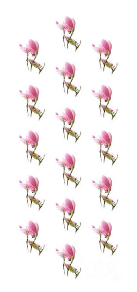 Photograph - Magnolia Blossom Panel Flipped by Andee Design