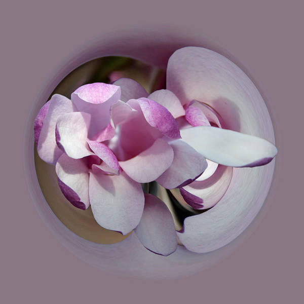 Photograph - Magnolia Blossom Series 1305 by Jim Baker
