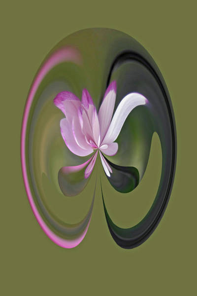 Photograph - Magnolia Blossom Series 710 by Jim Baker