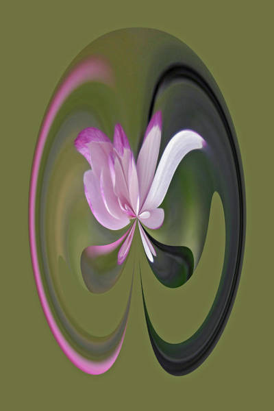Photograph - Magnolia Blossom Series 714 by Jim Baker