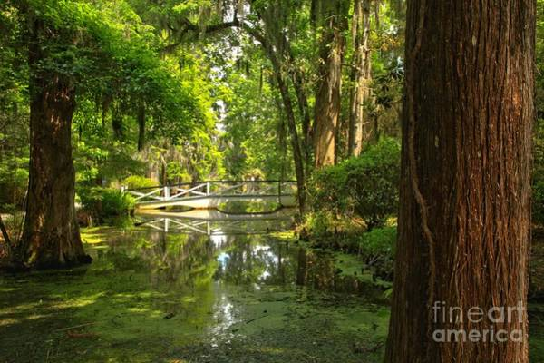 Photograph - Magnolia Bridge In The Distance by Adam Jewell