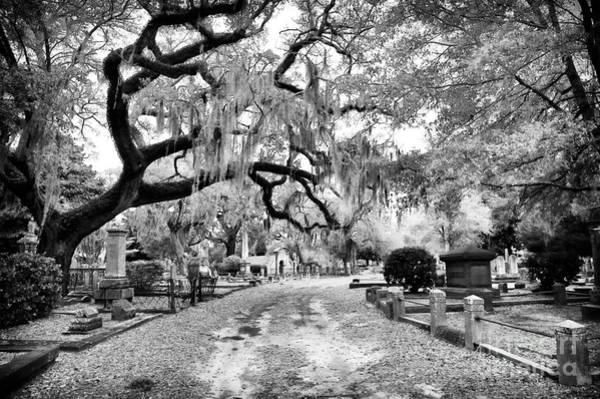 Photograph - Magnolia Cemetery by John Rizzuto