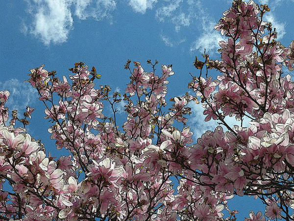 Photograph - Magnolia  by Dragan Kudjerski