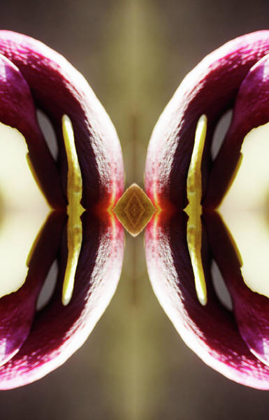 Photograph - Magnolia Flower by Silvia Otte