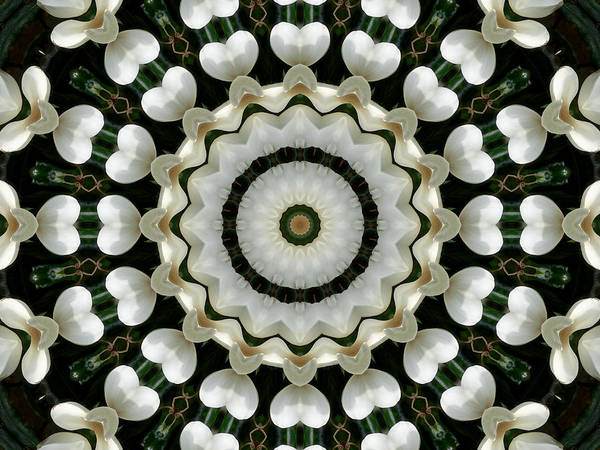 Photograph - Magnolia Hearts Mandala by MM Anderson
