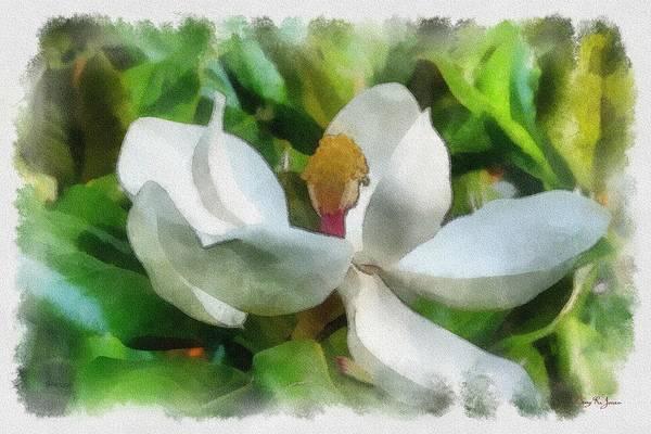 Painting - Magnolia In Bloom by Barry Jones