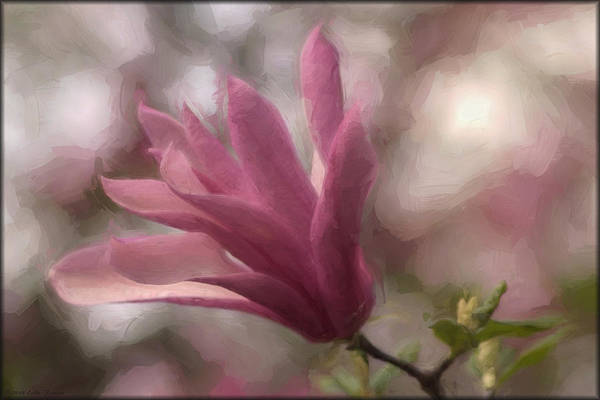 Photograph - Magnolia In Oils by Erika Fawcett