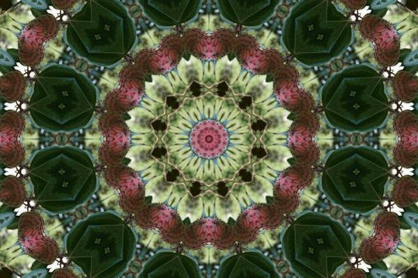 Photograph - Magnolia Seed Pod Kaleidoscope by MM Anderson