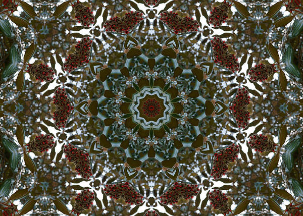 Photograph - Magnolia Seeds Kaleidoscope by MM Anderson