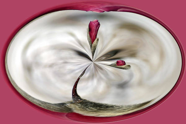 Photograph - Magnolia Series 704 by Jim Baker