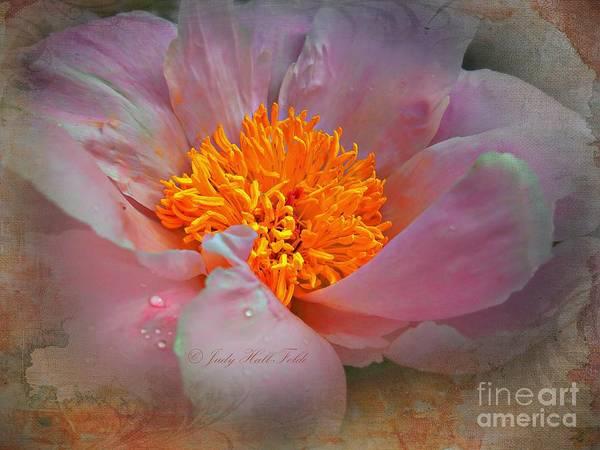 Photograph - Magnolia Tapestry by Judy Hall Folde And John Kolenberg