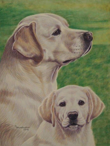 Pup Drawing - Magnum Then And Now by Debbie Stonebraker