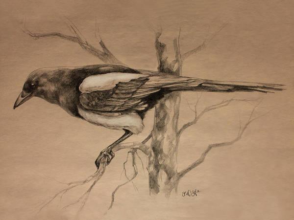 Avian Drawing - Magpie Sketch by Derrick Higgins