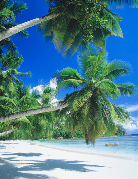 Respite Photograph - Mahe Seychelles by Panoramic Images
