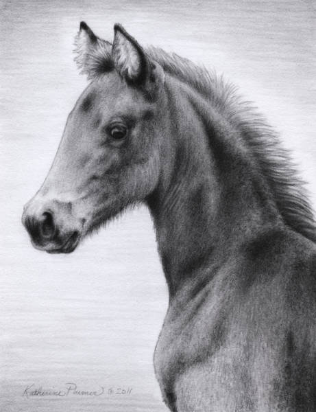 Equine Drawing - Mai Tai by Katherine Plumer