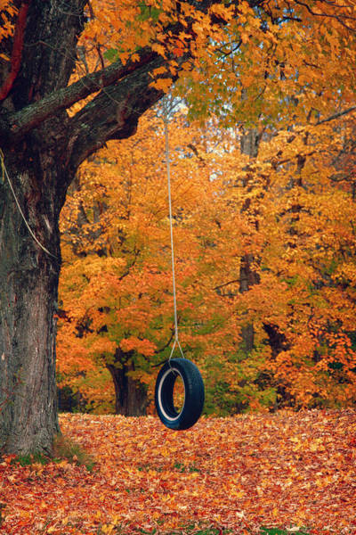 Photograph - Maine Fall Foliage Around Tire Swing by Jeff Folger