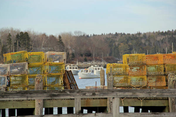 Lobstering Photograph - Maine Passion by Becca Wilcox