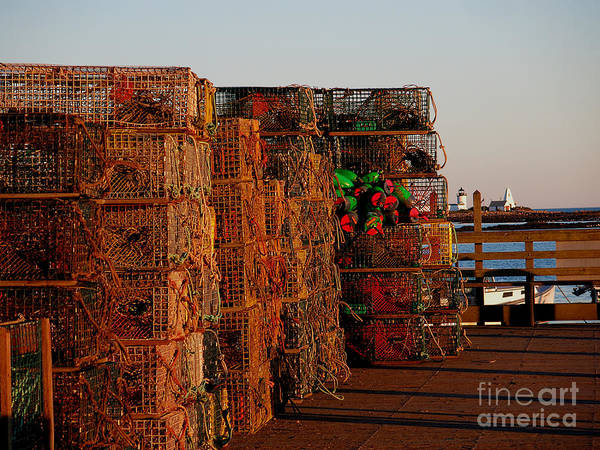 Photograph - Maine Traps by HEVi FineArt