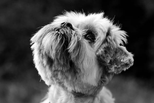 Wall Art - Photograph - Maisie by Chris Whittle