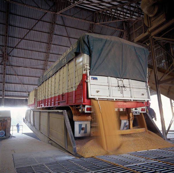 Logistics Photograph - Maize Industry by Steve Percival/science Photo Library