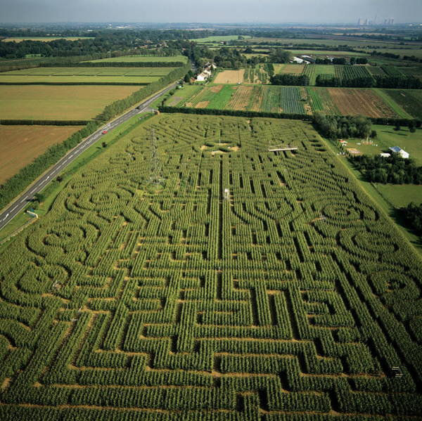 Wall Art - Photograph - Maize Maze by Skyscan/science Photo Library