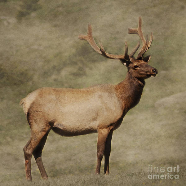 Photograph - Majestic Beauty by Pam  Holdsworth