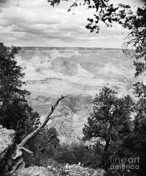 Photograph - Majestic Grand Canyon From The Rim In Black And White by M K Miller