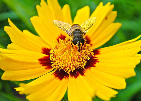 Bee Sting Photograph - Majestic Granduer by Frozen in Time Fine Art Photography