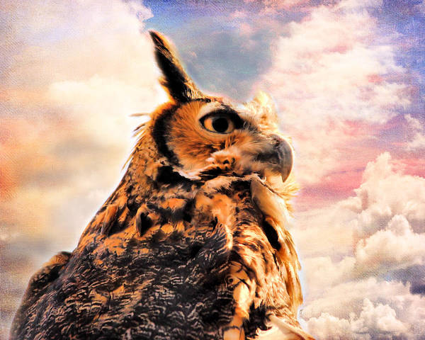 Photograph - Majestic Great Horned Owl by Jai Johnson