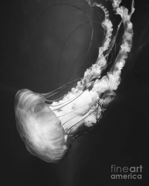 Jelly Fish Photograph - Majestic Jellyfish Bw by Michael Ver Sprill