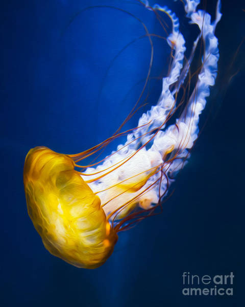 Jelly Fish Photograph - Majestic Jellyfish by Michael Ver Sprill