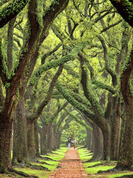Texas A Photograph - Majestic Live Oak Canopy by Sandra L. Grimm