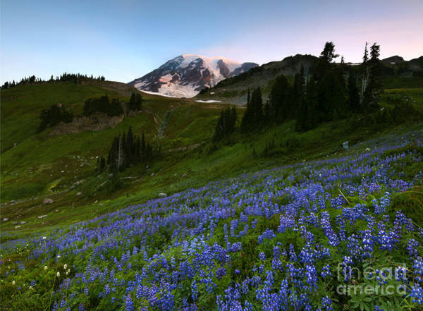 Wall Art - Photograph - Majestic Meadow by Mike Dawson