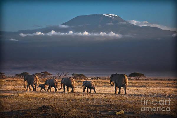 Photograph - Majestic Mount Kilimanjaro - Omg by Gary Keesler