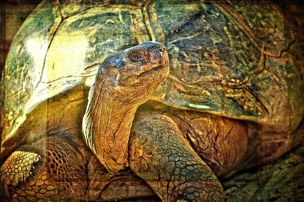 Photograph - Majestic Tortoise by Alice Gipson