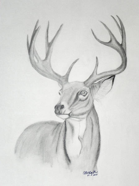 White Tailed Deer Drawing - Majesty by Cheryl McKeeth