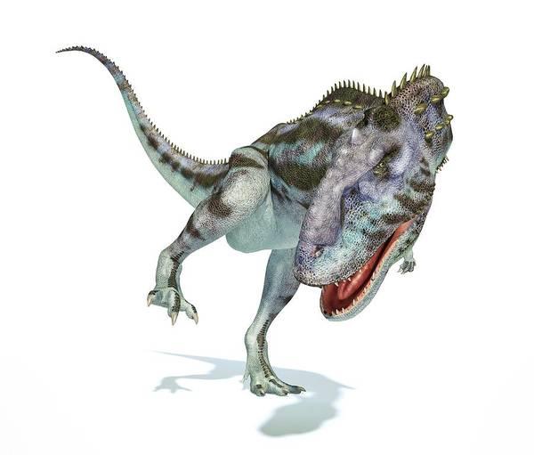 Abelisauridae Wall Art - Photograph - Majungasaurus Dinosaur by Leonello Calvetti