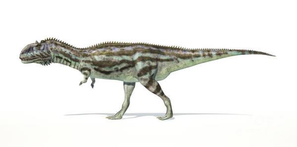Abelisauridae Wall Art - Digital Art - Majungasaurus Dinosaur On White by Leonello Calvetti