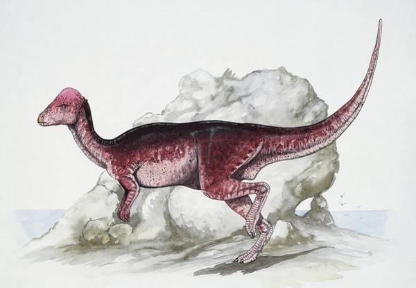 Cretaceous Wall Art - Photograph - Majungatholus by Deagostini/uig/science Photo Library