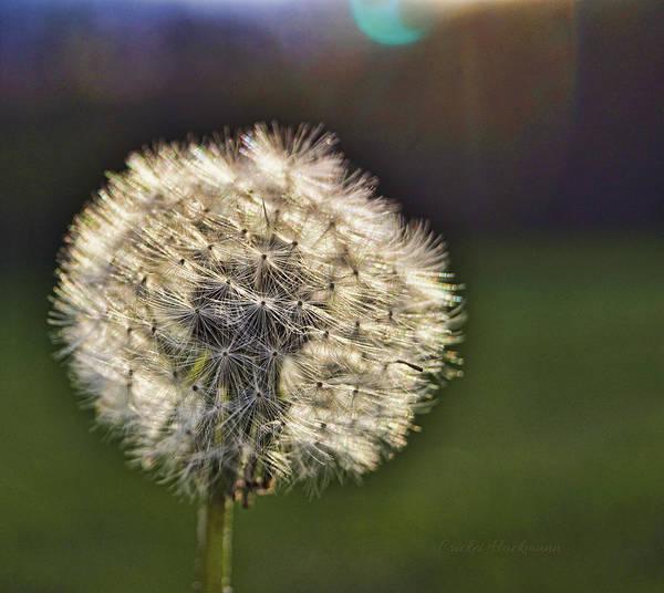 Photograph - Make A Wish by Cricket Hackmann