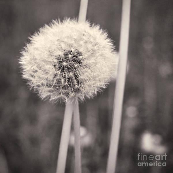 Wish Photograph - make a wish II by Priska Wettstein