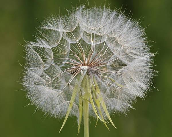Photograph - Make A Wish by Lee Kirchhevel