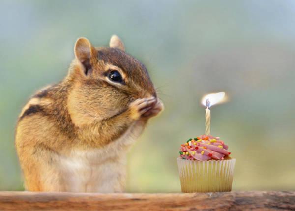 Cupcakes Photograph - Make A Wish by Lori Deiter