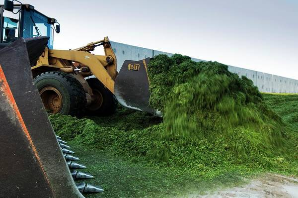 Kibbutz Photograph - Making Silage by Photostock-israel/science Photo Library