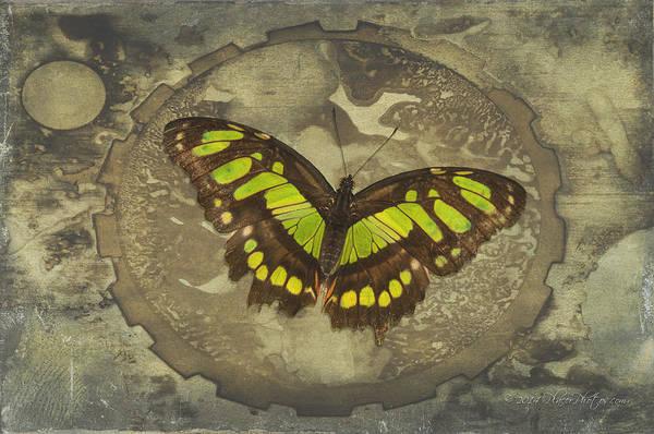 Photograph - Malachite Butterfly by Jim Thompson