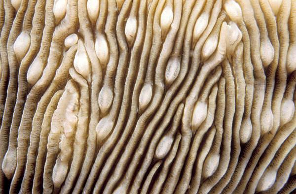 Wall Art - Photograph - Maldives Texture Montipora Danae by Anonymous