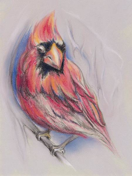 Pastel - Male Cardinal In Winter by MM Anderson