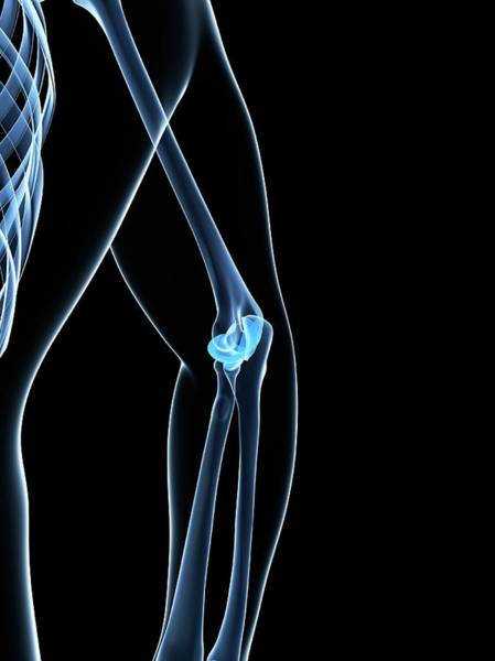 Normal Wall Art - Photograph - Male Elbow Bones by Sciepro/science Photo Library