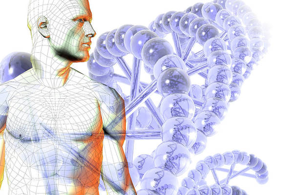 Wireframe Photograph - Male Figure With Dna by Carol & Mike Werner